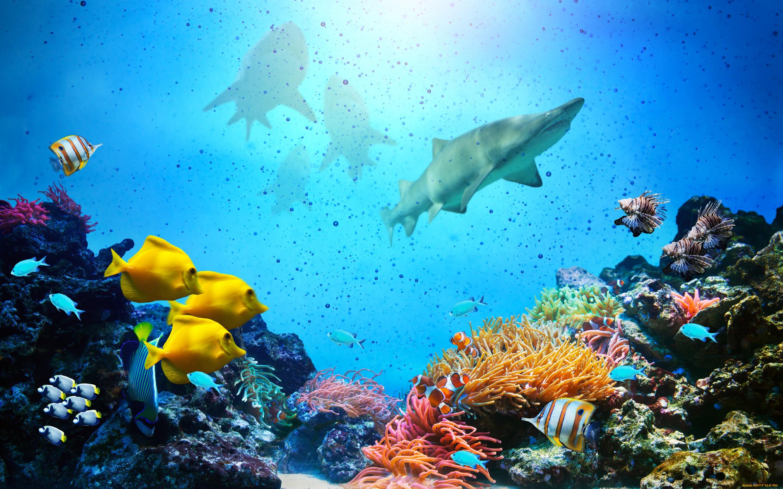 Подводный мир картинки большого размера